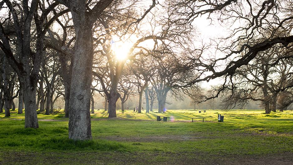 A grove of oak trees in one of Rocklin's many city-maintained parks and open areas.